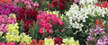 annuals & bulbs