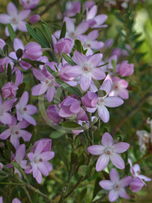 descriptive essay about flowers
